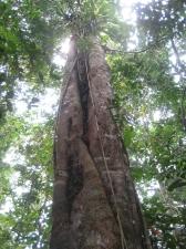 Regenwald in Ecuador