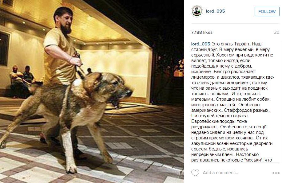 """""""Eine Schande für Russland"""": Tschetschenischer Regierungschef Kadyrow von PutinsGnaden"""