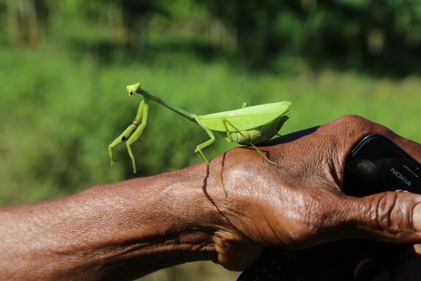 Artenvielfalt_Regenwald_Yorenka-Atame